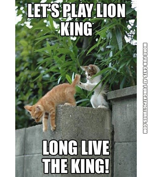 fun cat picture long live the lion king