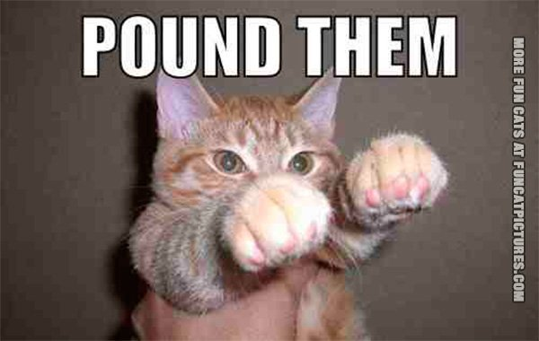 fun-cat-picture-pound-them