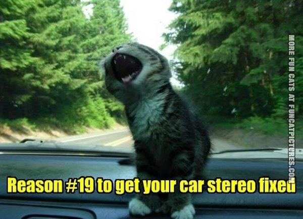 fun-cat-picture-reason-to-get-your-car-stereo-fixed