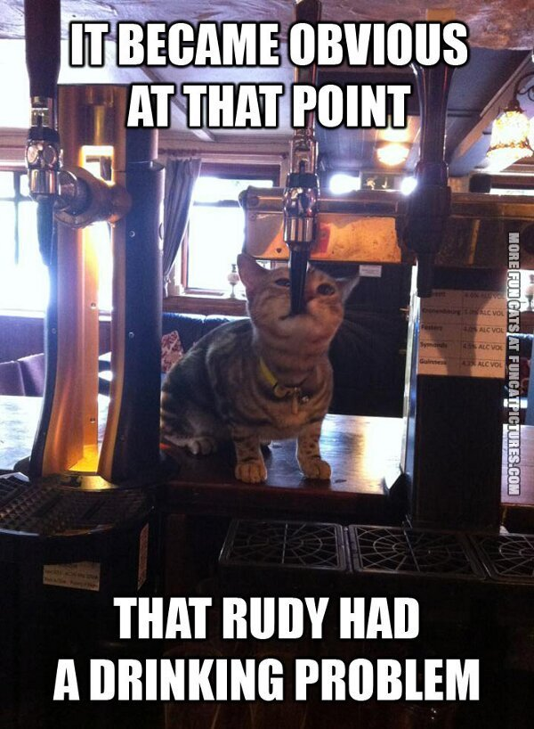 fun cat picture ruby had a drinking problem