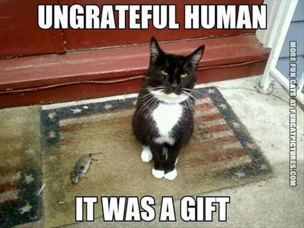 fun cat picture ungreatful human it was a gift