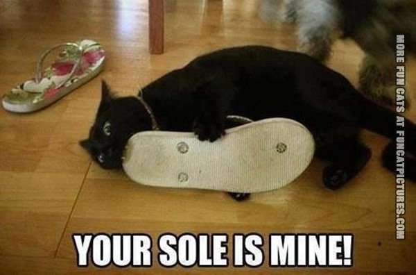 fun-cat-picture-your-sole-is-mine