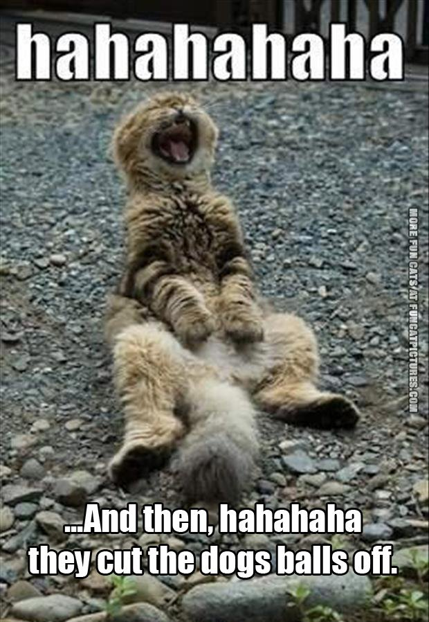 funny cat pics and then they cut the dogs balls off