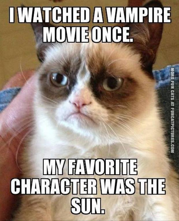 funny cat pics grumpy watched a vampire movie