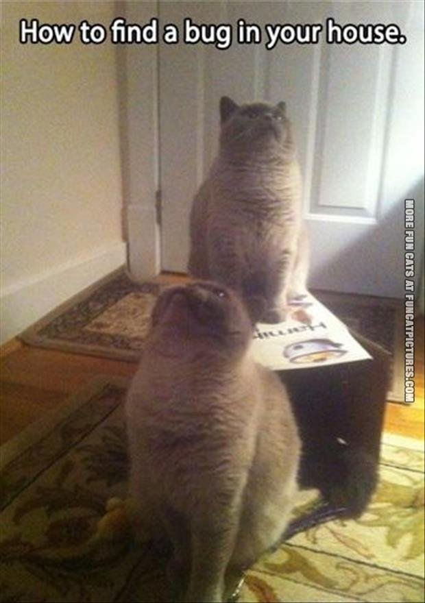 funny cat pics how to find a bug in your house