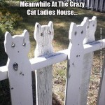 At the crazy cat ladies house