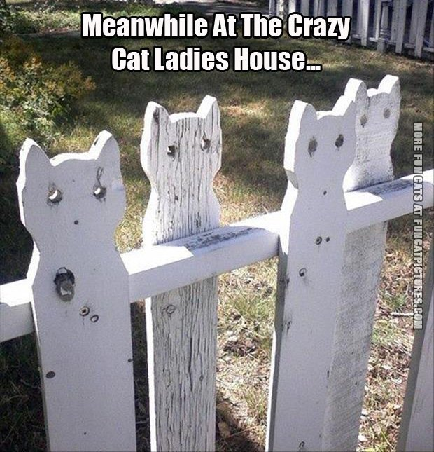 funny cat pics meanwhile at the crazy cat ladys house