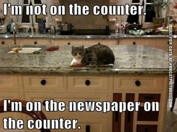 funny cat pics not on the counter