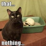 A cat with a skull
