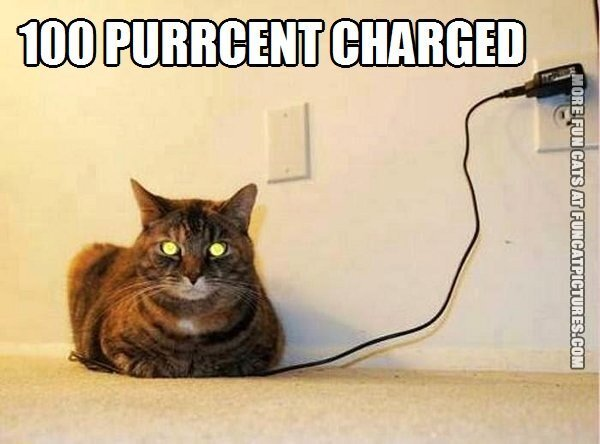 funny cat picture 100 purrcent charged