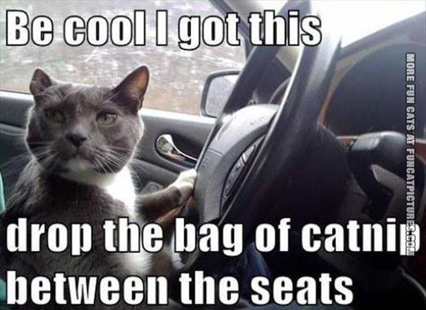 funny cat picture drop the catnip between the seats