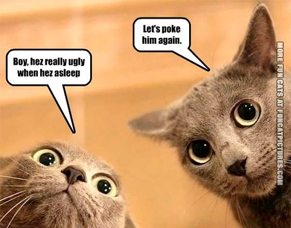 funny-cat-picture-hes-really-ugly-when-he-sleep-lets-poke-him-again