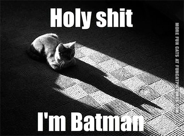 funny-cat-picture-holy-shit-im-batman