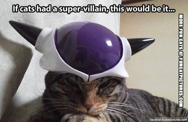 super funny cat pictures - photo #27
