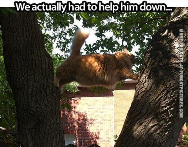 funny cat pictures we had to help hom down
