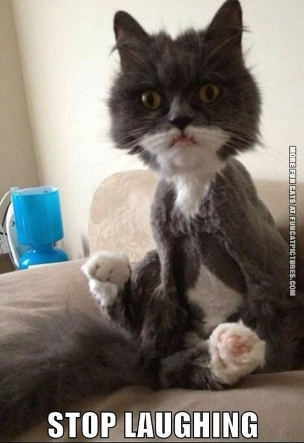 fun-cat-picture-stop-laughing-shaved-cat