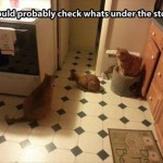 Cats at the stove