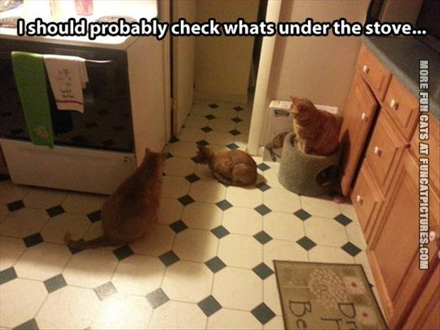 fun cat picture whats under the stove
