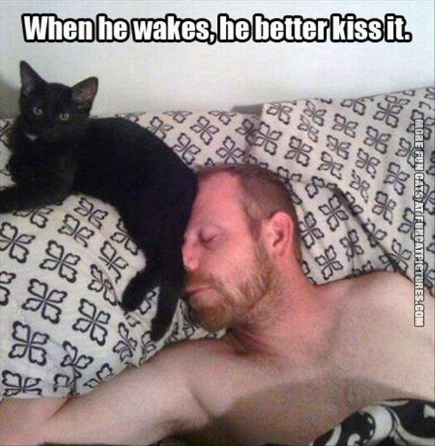 fun cat picture when he wakes hed better kiss it