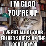 Every cat in the morning…