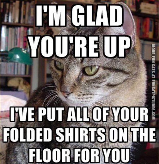 funny-cat-pics-all-your-folded-shirts-on-the-floor
