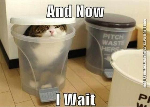 funny cat pics and now i wait