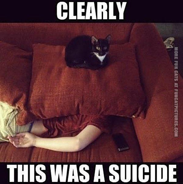 funny-cat-pics-clearly-this-was-a-suicide