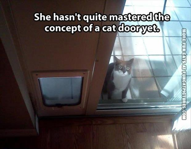 funny cat pics concept of a cat door