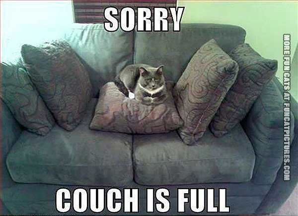 funny-cat-pics-couch-is-full