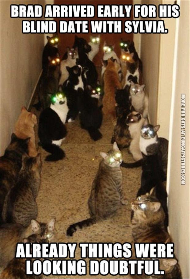 funny cat pics date with the crazy cat lady