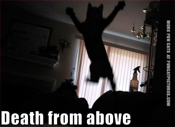 funny-cat-pics-death-from-above