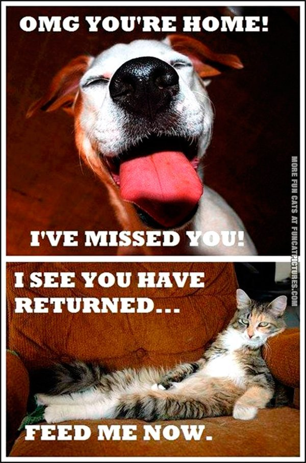 funny-cat-pics-difference-between-dogs-and-cats