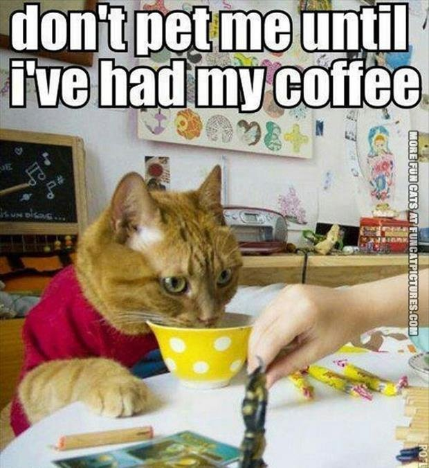 funny-cat-pics-dont-pet-mi-until-i-had-my-coffee