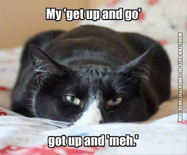 funny cat pics get up and meh