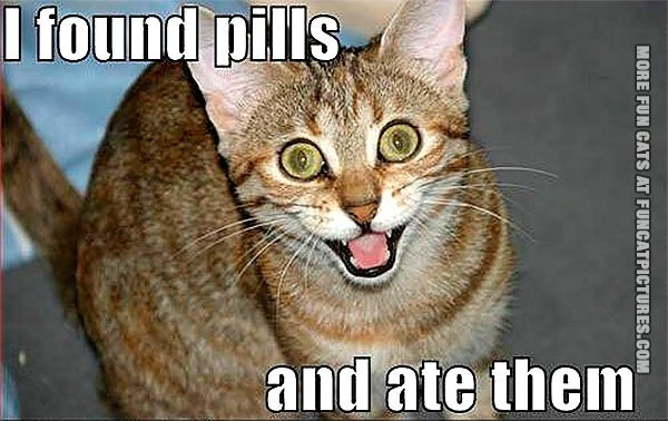 funny-cat-pics-i-found-pills-and-ate-them