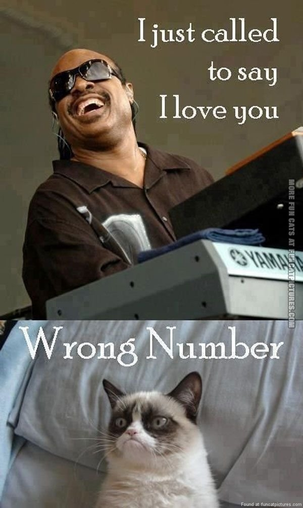 funny cat pics i jus called to say i love you grumpy