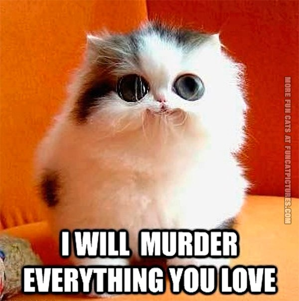 funny-cat-pics-i-will-murder-everything-you-love