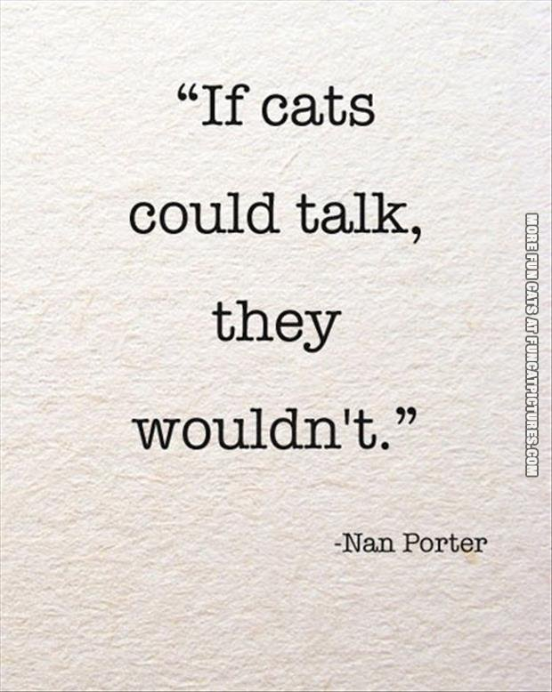 funny cat pics if cats could talk they wouldnt