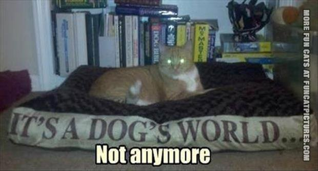 funny cat pics its a dogs world
