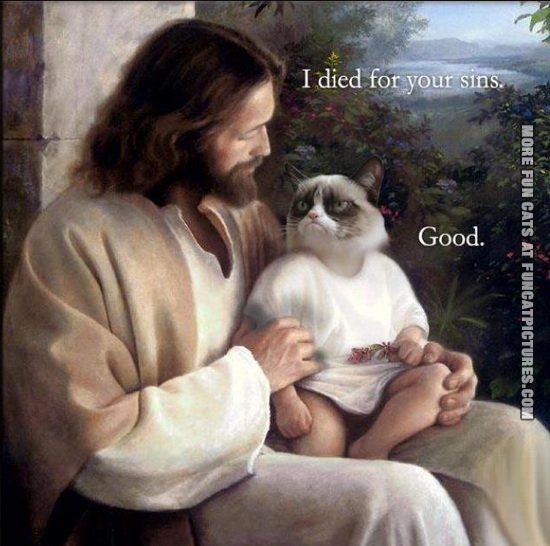 funny cat pics jesus died for your sins grumpy