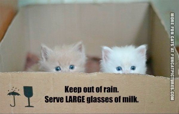 funny-cat-pics-keep-out-of-rain-kittens-in-a-box
