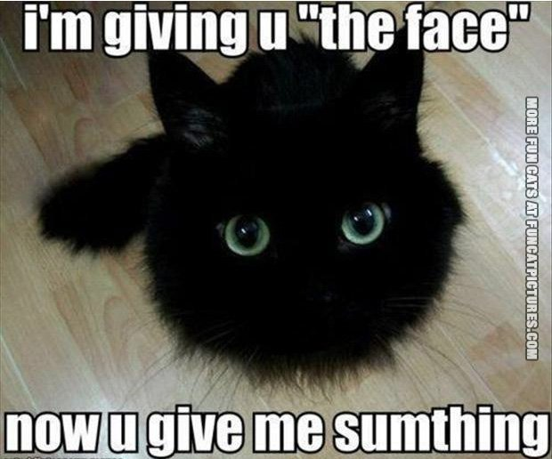 funny-cat-pics-kitten-giving-the-face