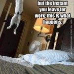 Cats are not so lazy after all…