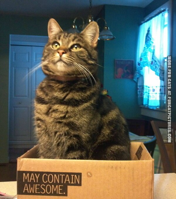 funny cat pics may contain awesome