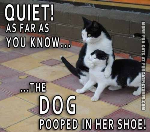 funny-cat-pics-poop-in-shoe-blame-the-dog