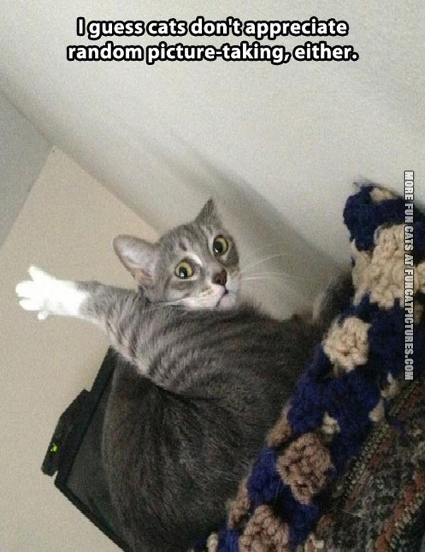 funny-cat-pics-random-picture-taking