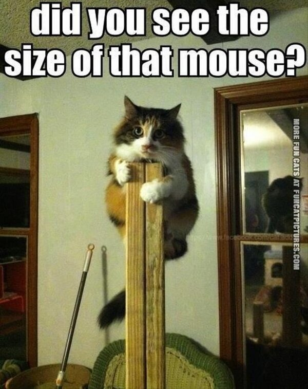 funny cat pics scared of mouse