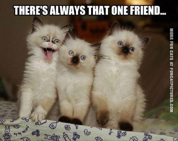 funny cat pics that one friend