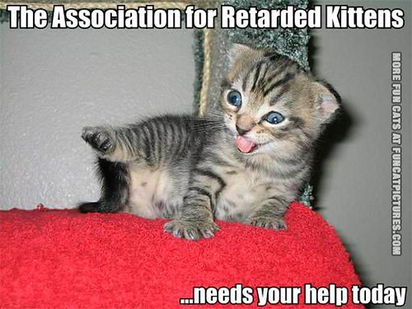 funny-cat-pics-the-association-for-retarded-kittens