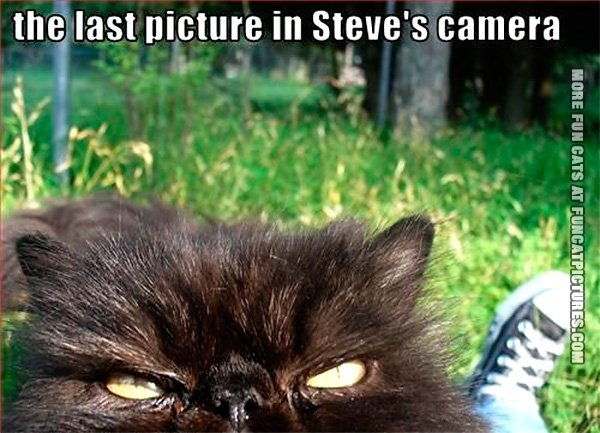 funny-cat-pics-the-last-picture-in-steves-camera